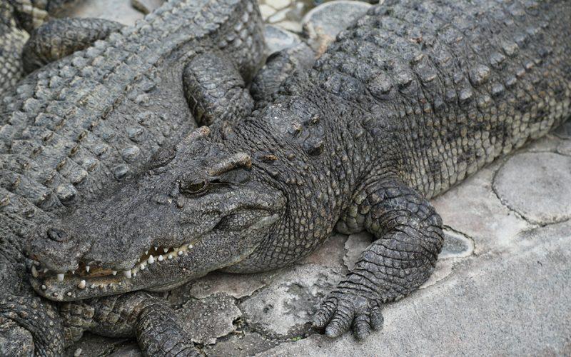 Atagawa banana crocodile garden – Izu Peninsula