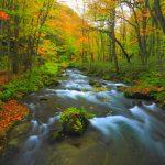 Oirase Stream – Aomori